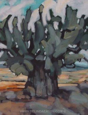 Olive Tree (2002) 81 x 106 cm